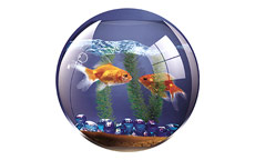 Fellowes 5881103 Brite Pad Goldfish Bowl Pack of 6